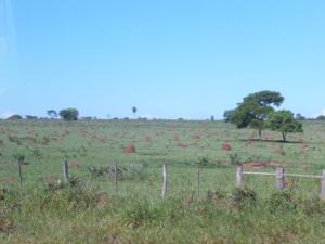 eingezäunte Termitenfarm in Mato Grosso, damit die Termiten nicht fliehen können