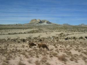 Altiplano mit Lamas