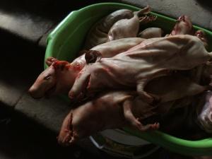Meerschweinchen auf dem  Mercado Dan Pedro in Cusco für 20 Soles das Stück (ca. 5€)