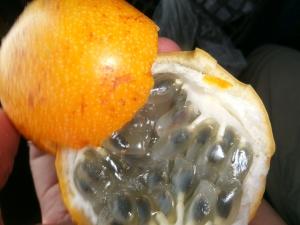 Kaulquappen-Obst??? Nein, Granadilla!!