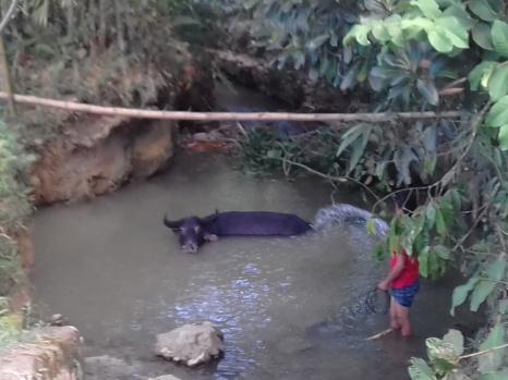 Lucky Buffalo im Spa!